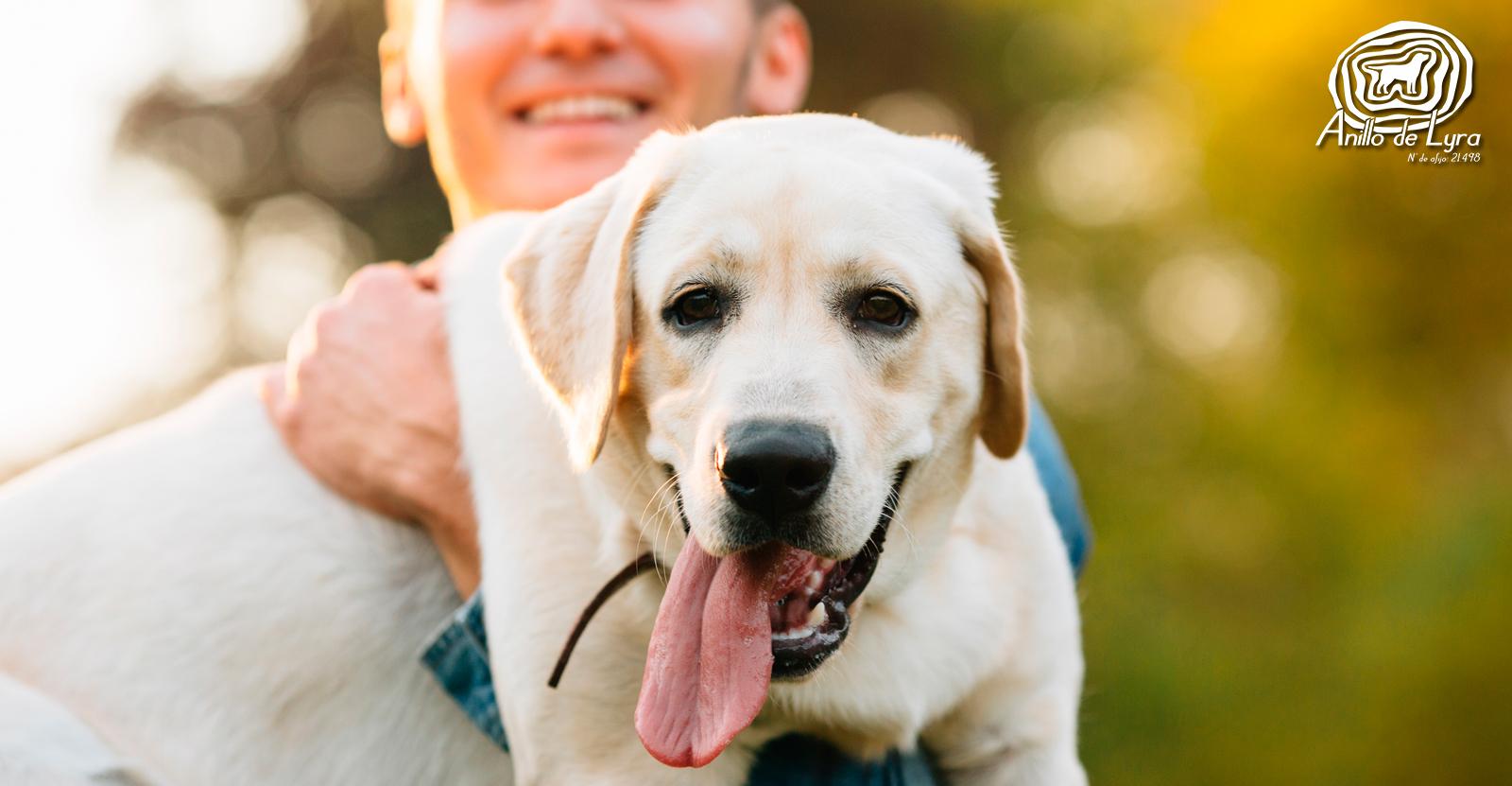 Labrador Retriever: origen e historia